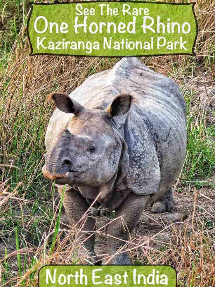 Visit Kaziranga National Park in North East India to see the rare one-horned rhino and maybe tigers
