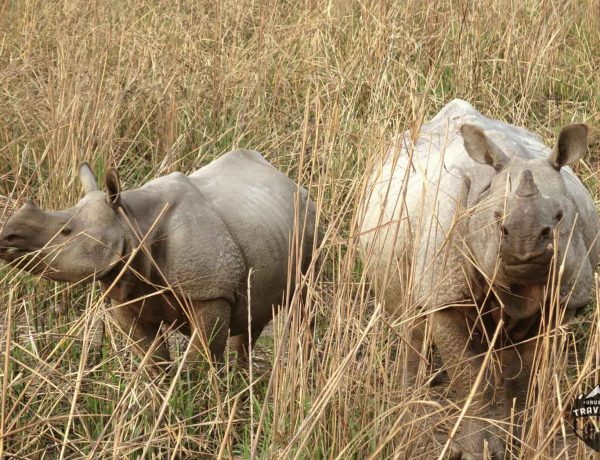 Kaziranga National park in North East India. #India , #Kaziranga , #Rhinos , #Wildlife