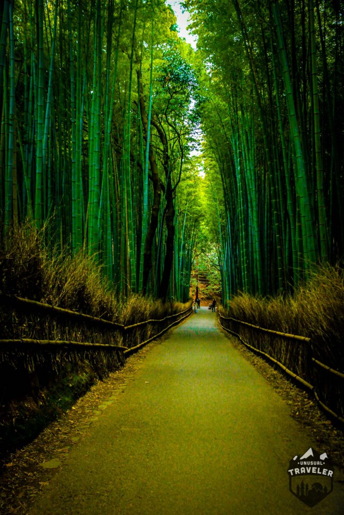 Bambo forest outside Kyoto in Japan. #kyoto,#japan,#forest,#bamboo