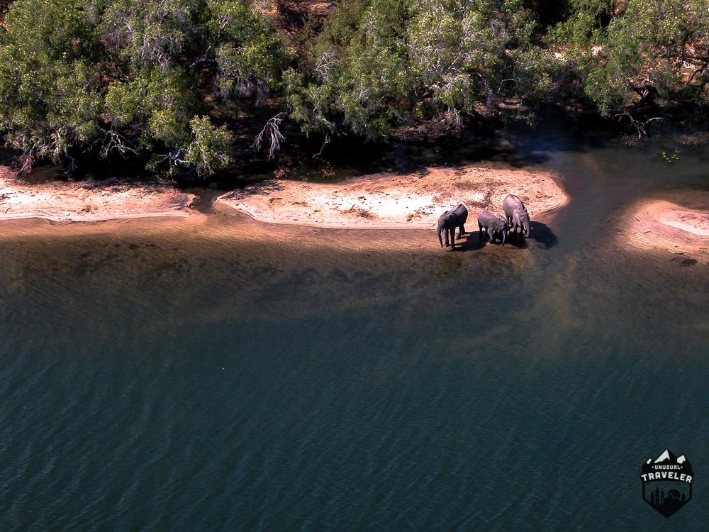 victoria falls wildlife elephants