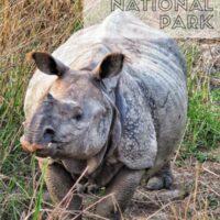 kaziranga,india,rhinos