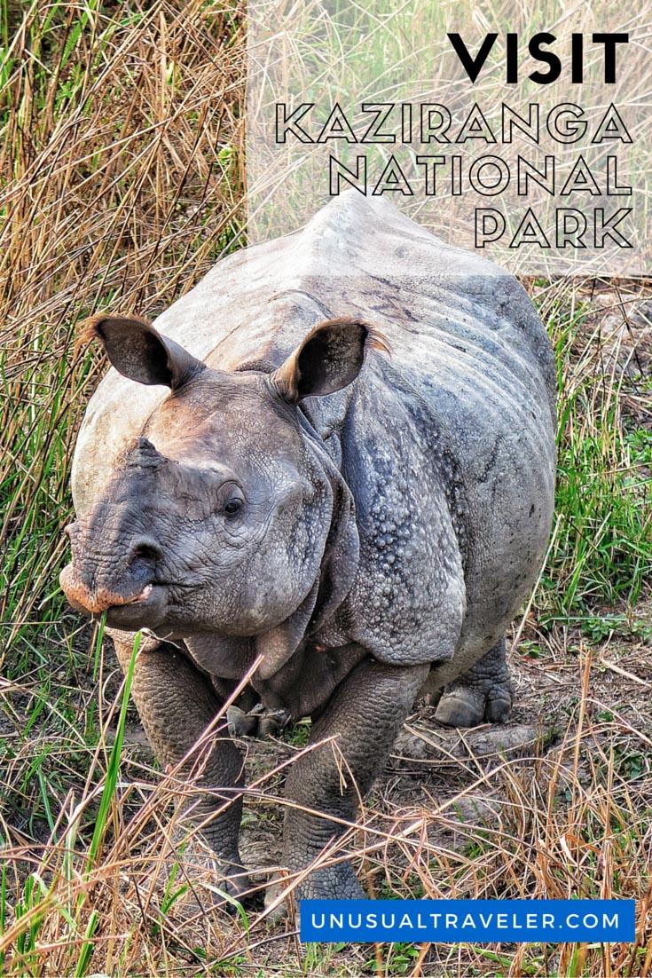 Kaziranga National Park, One horned Rhinos,india,assam,north east india