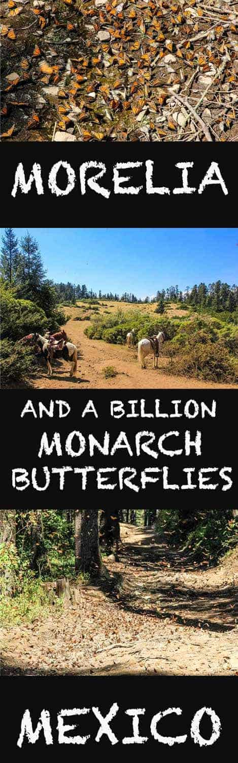 In central Mexico, outside the small charming town called Morelia, there's an incredible UNESCO World Heritage site. A fantastic phenomenon was happening every winter from November to March; countless monarch butterflies show up in the Monarch Butterfly Biosphere Reserve