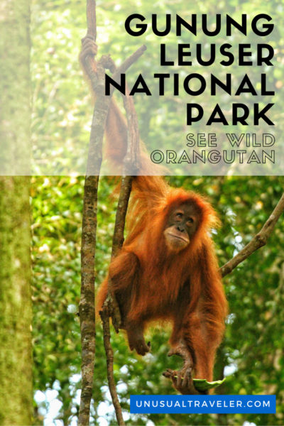 Travel guide to Gunung Leuser National Parks in Indonesia