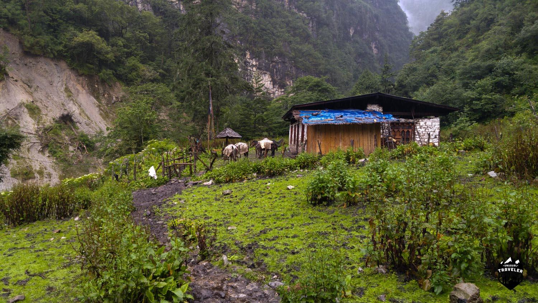 Bhutan,Trekking,Koina