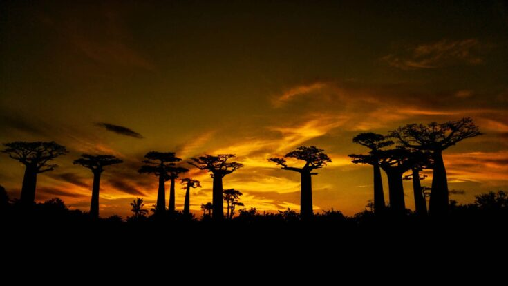Sunset over the Baobabs Madagascar