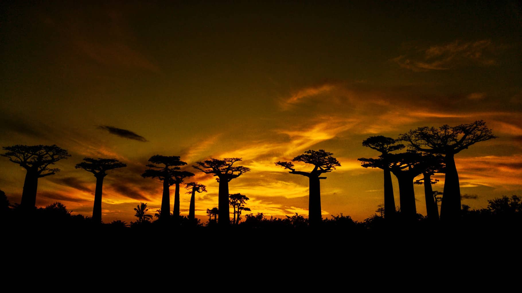Sunset over the Baobab Trees in Madagascar