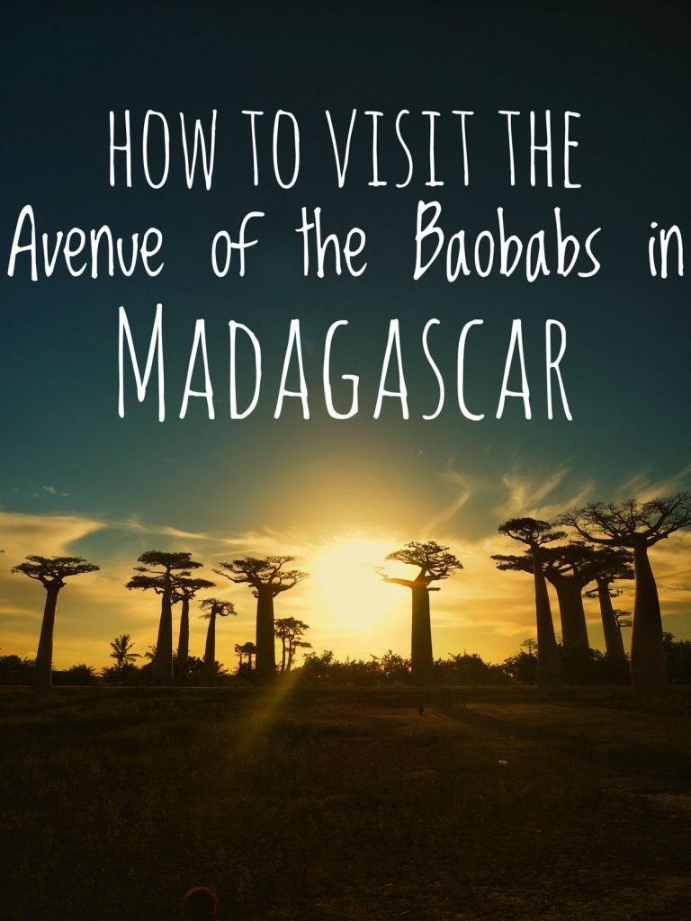 How to visit theAvenue Of The Baobabs in Madagascar, one of the most famous landmarks in all of Africa. Travel guide to Madagascar