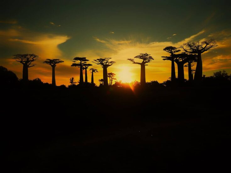 Sunset over the famous Sunset over the Baobabs in western Madagascar.