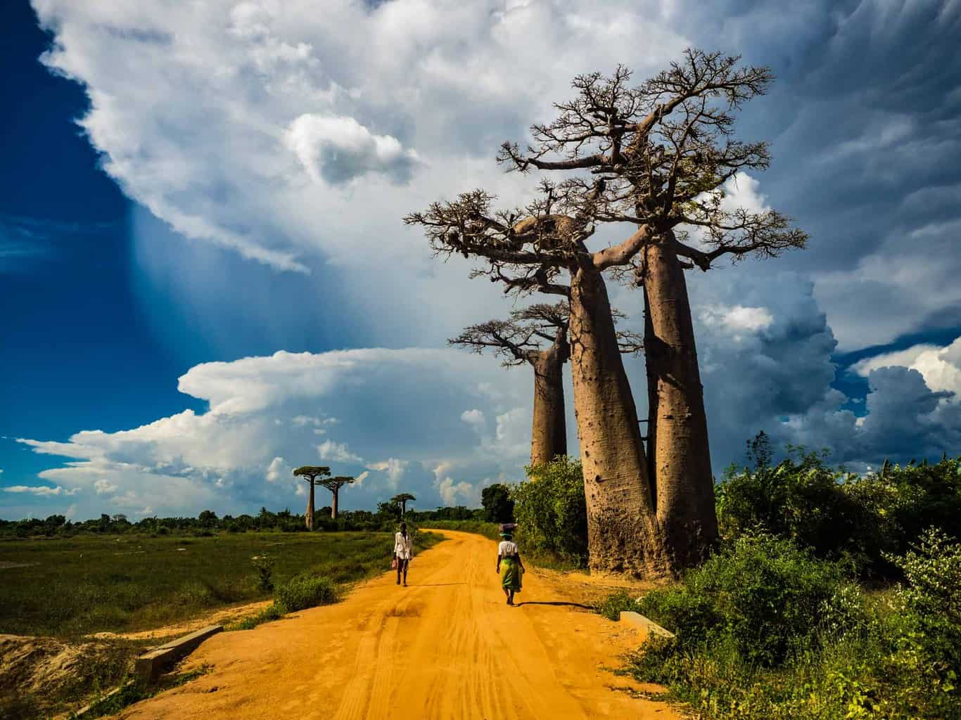 One of the first view you will get of Baobabs trees, these ones are called the Twin baobabs