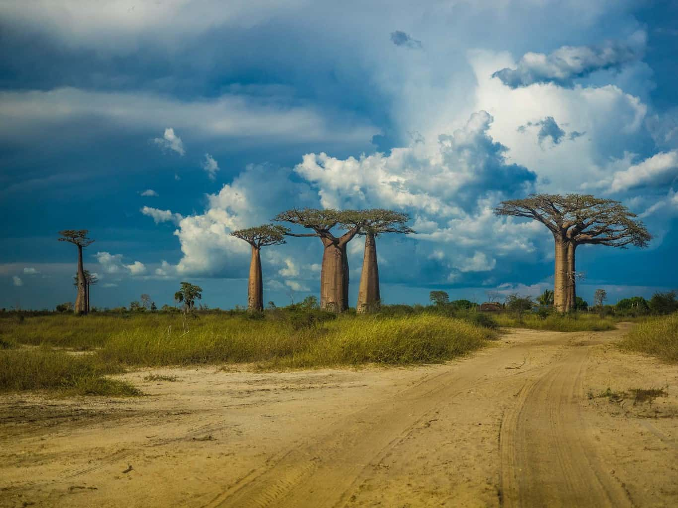 Not many baobab trees in this area in Madagascar