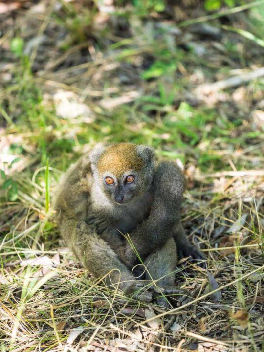 lemur park in Madagascar