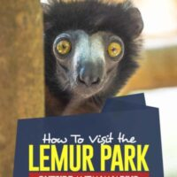 Want to See Lemur in the Lemurs outside the capital of Madagascar. #madagascar #africa #wildlife #animals #lemur