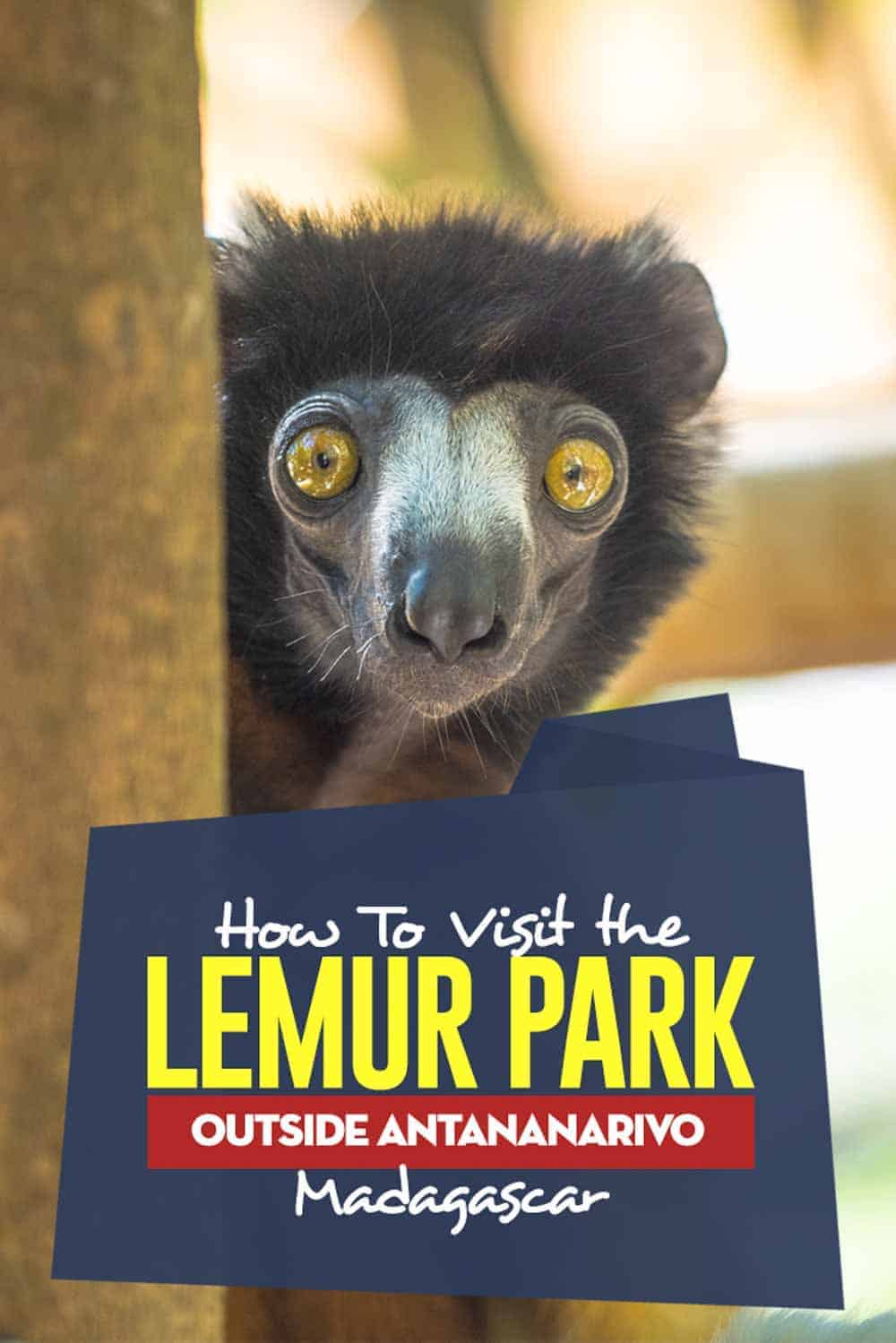 Travel Guide to See Lemur in the Lemurs outside the capital of Madagascar. #madagascar #africa #wildlife #animals #lemur
