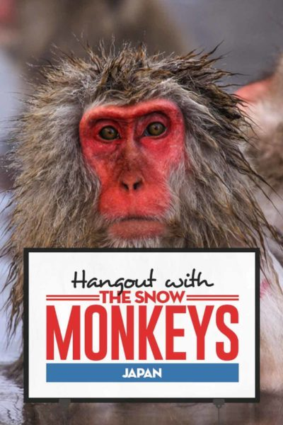 Travel guide to visit snow monkeys in Japan