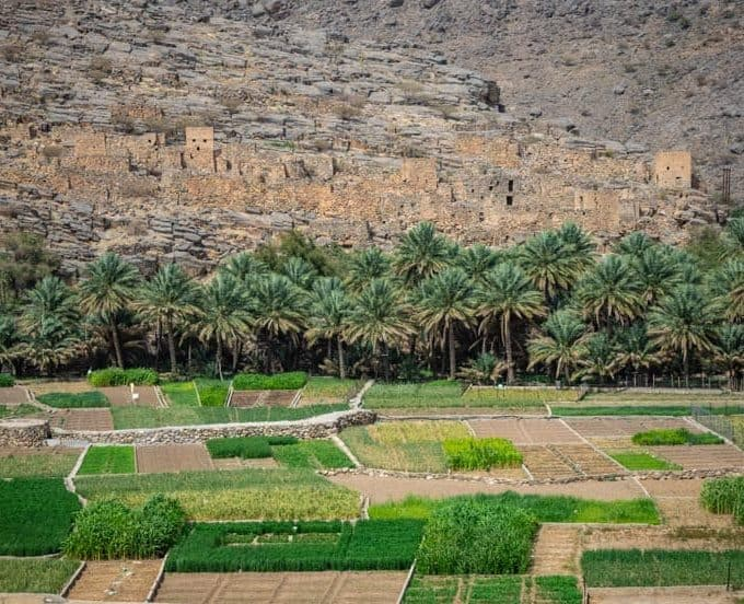 Farmland on the way to Jebel Shams