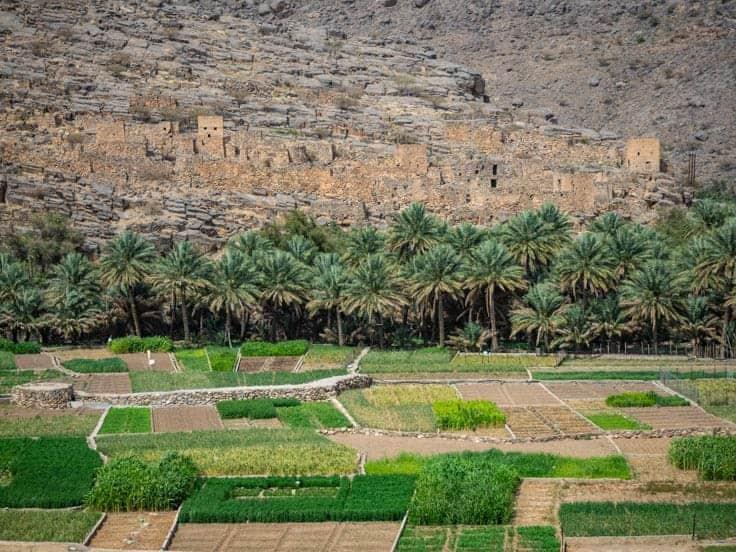 Farmland on the way to Jebel Shams in Oman