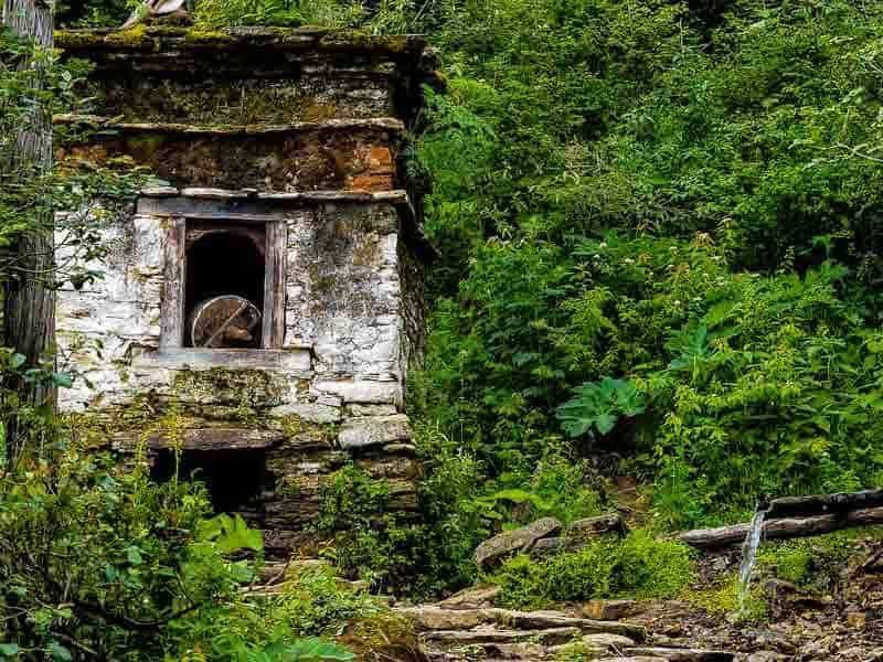 nature in Bhutan is taking over