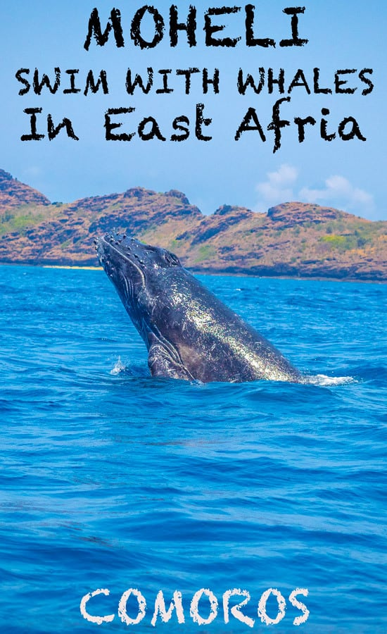 Moheli in the small island nation of Comoros East Africa is one of the best places in the world where you can swim with humpback whales. This paradise in the Indian ocean is a true paradise
