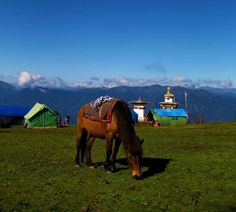 horse in Bhutan