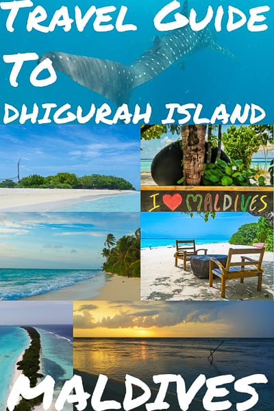A journey to Dhigurah island in the Maldives on a whim turned out to be every bit the exciting adventure I hoped for.underwater, diving,padi, whale shark
