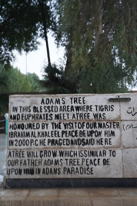 The supposedly Tree of Knowledge in Iraq