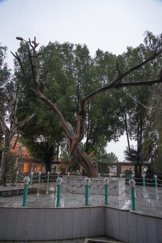 TREE OF KNOWLEDGE in iRAQ