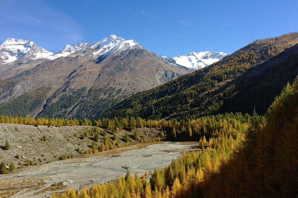 Fall colors of the Larch trees along the Gemserweg in Saas Fee in Switzerland