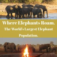 travel guide to see elephants in Botswana
