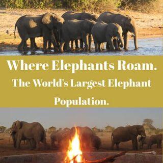 Botswana,elephants