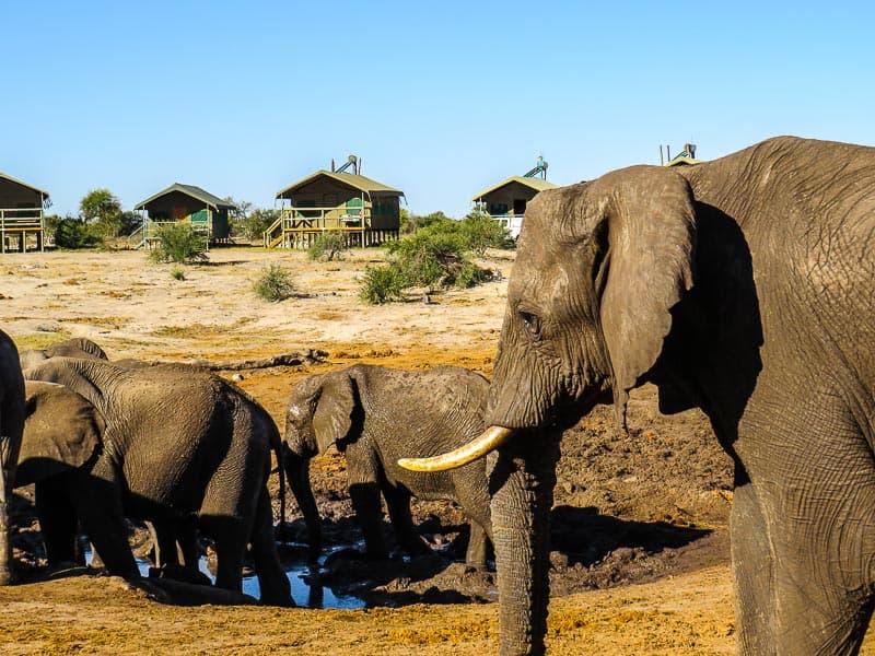 Elephant-Sands Botswana Africa