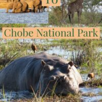 Chobe National Park is Botswana's third-largest national park one of the best parks in Africa