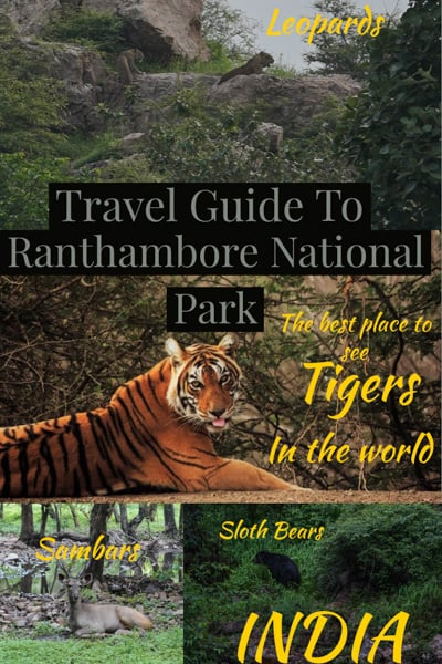 travel guide to Ranthambore national park in Rajasthan india, maybe the best place to see wild tigers in the world.