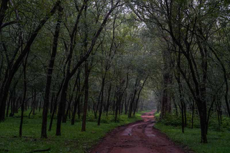 Ranthambore National Park in india