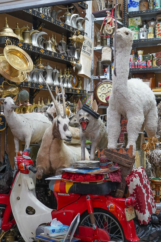 Souq al-Thumairi in Saudi Arabia animals