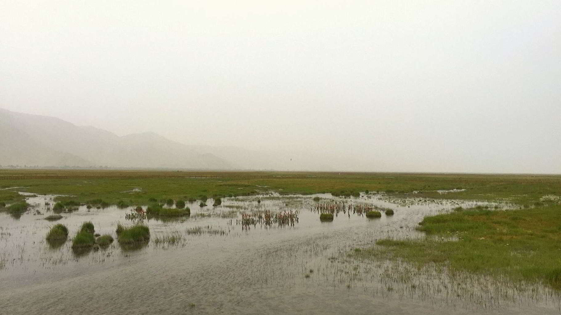 Golden Grassland in Tashkurgan