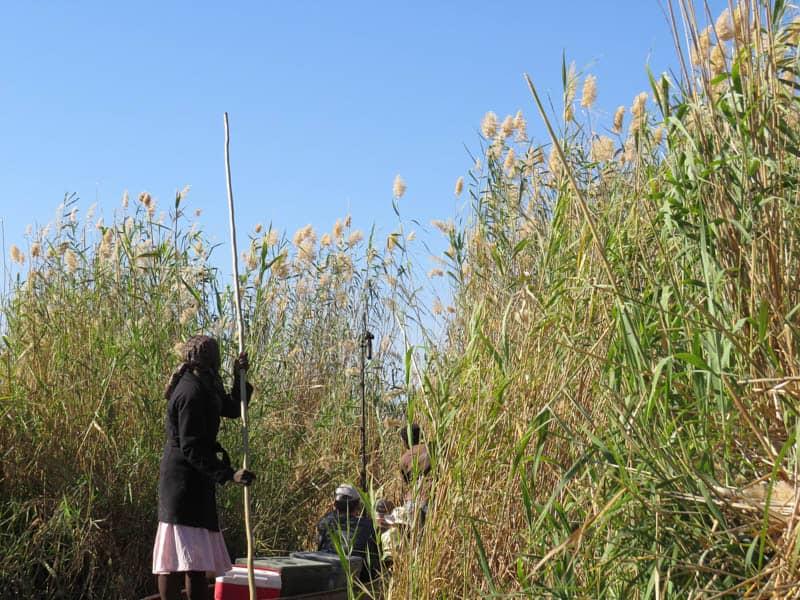 travelling the delta with Makoro , wooden canoes. in okavango delta Botswana