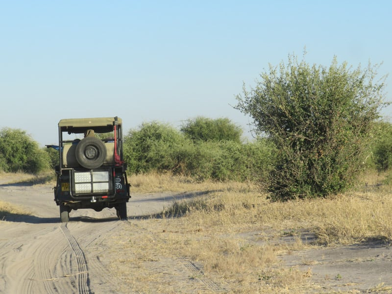 jeep safari chobe national park