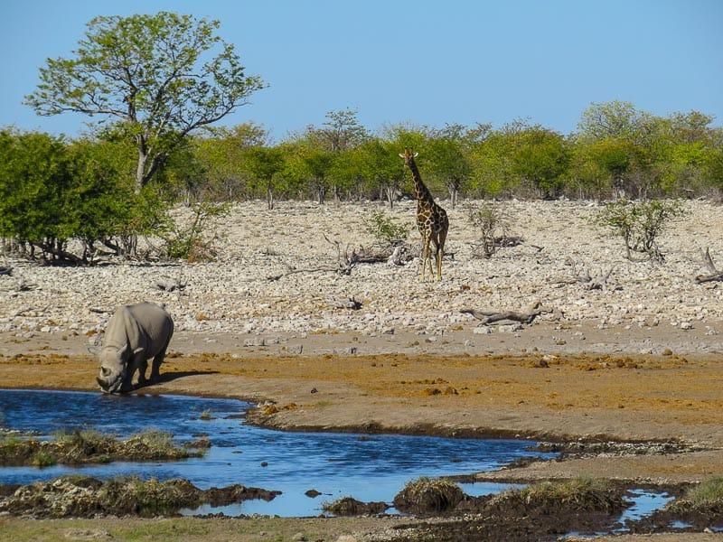 Намибия Этоша Водяная лунка Намибия 5 причин, по которым Намибия должна быть в Вашем списке. Namibia Etosha Water Hole
