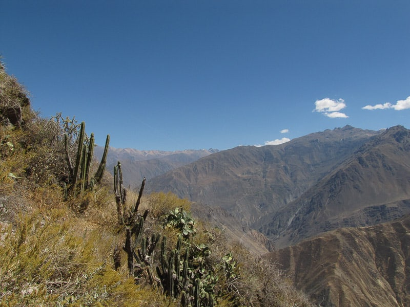 Cola Canyon Peru South America