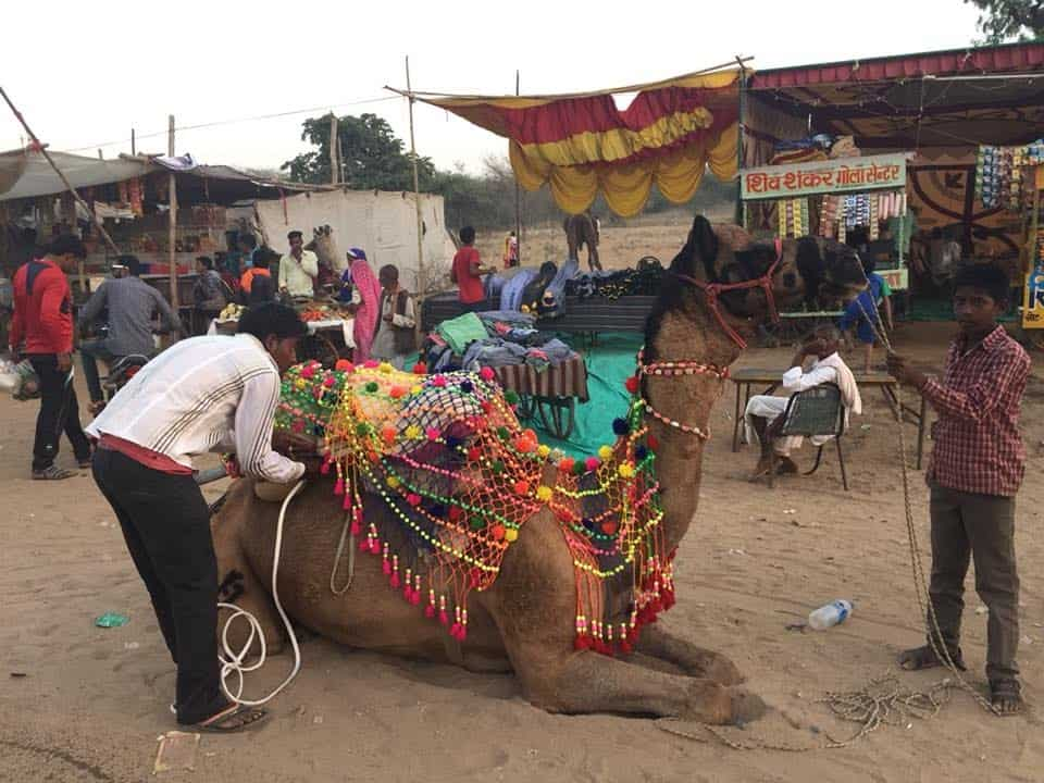 camel decoration in Pushkar