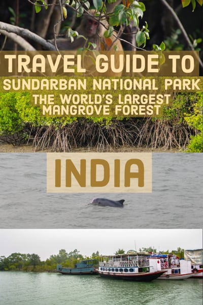 Travel Guide to Sundarbans National Park home to the world´s largest Mangroove forest, diver dolphins and the Royal Bengal Tiger. In east india on the border with Bangladesh.