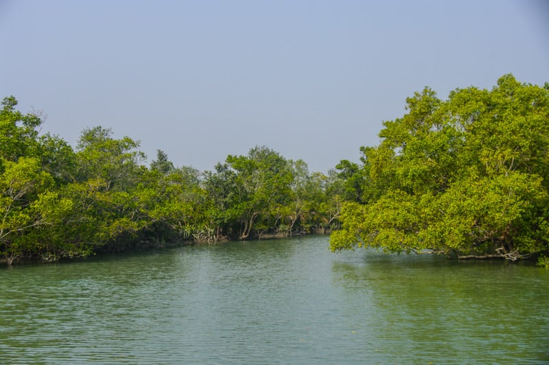Sundarbans national park in india