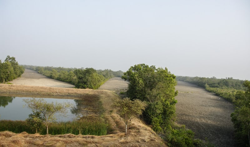 Water hole infront of one of the watch towers in Sundarbans