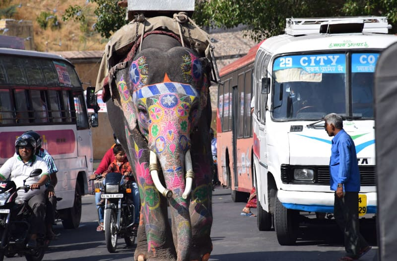 It´s common to see Elephants on the streets in Jaipur.
