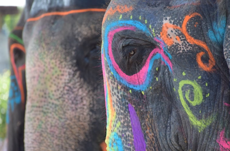 A decorated Elephant in Jaipur