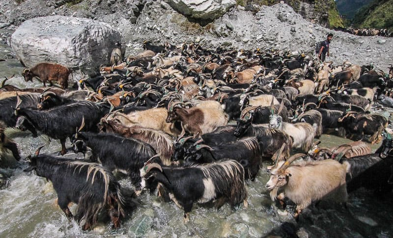 Typical traffic jam in Nepal