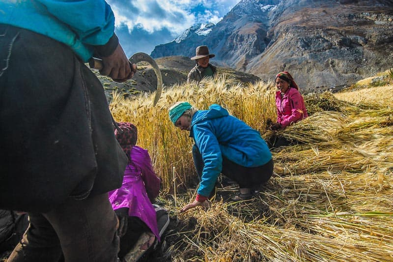 Ultimate Hike in Nepal. Dolpo to Jomsom to Jumla dolp