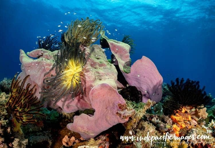 Beautiful and Healthy Reefs on the South Coast of New Britain in Papua New Guinea (PNG)