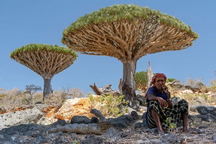 A local Bedouin having a rest under a Dragons Blood Trees socotra